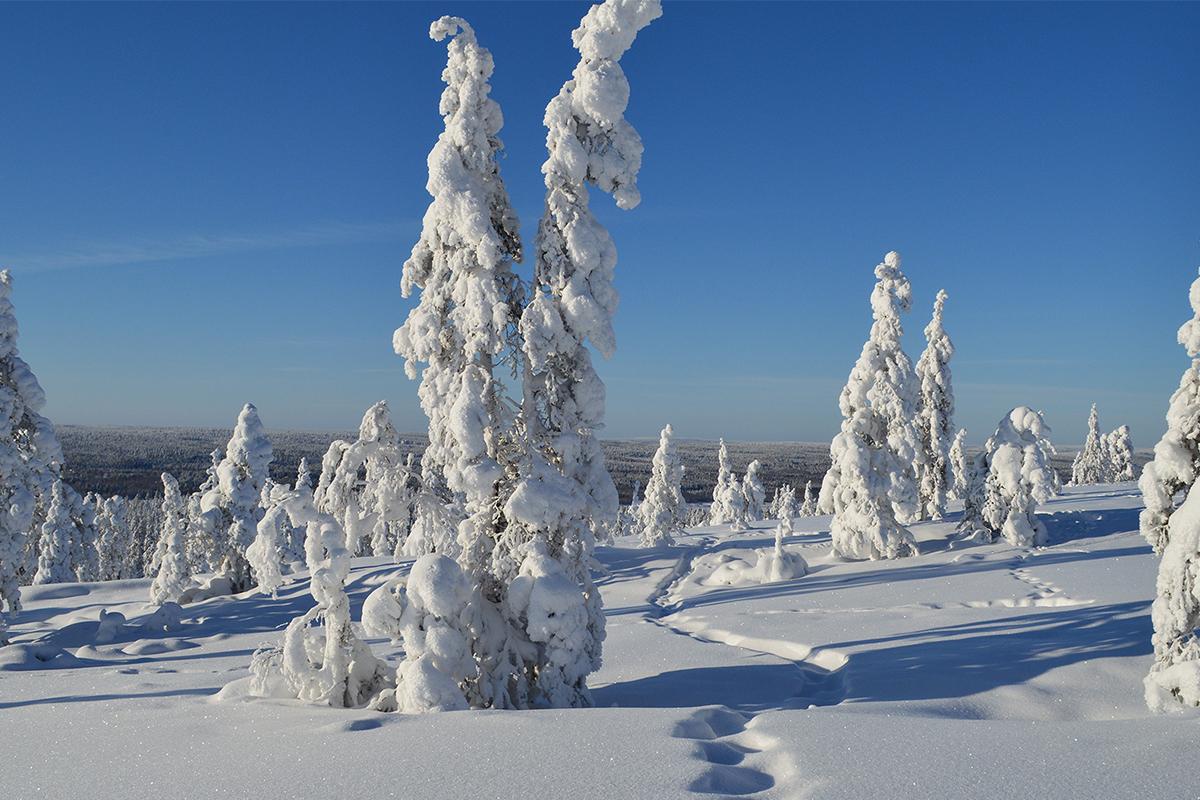 europa lapland