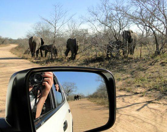 Safari in Zuid-Afrika - olifanten