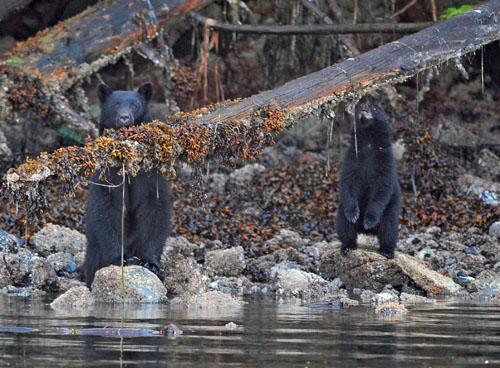 beren in Vancouver