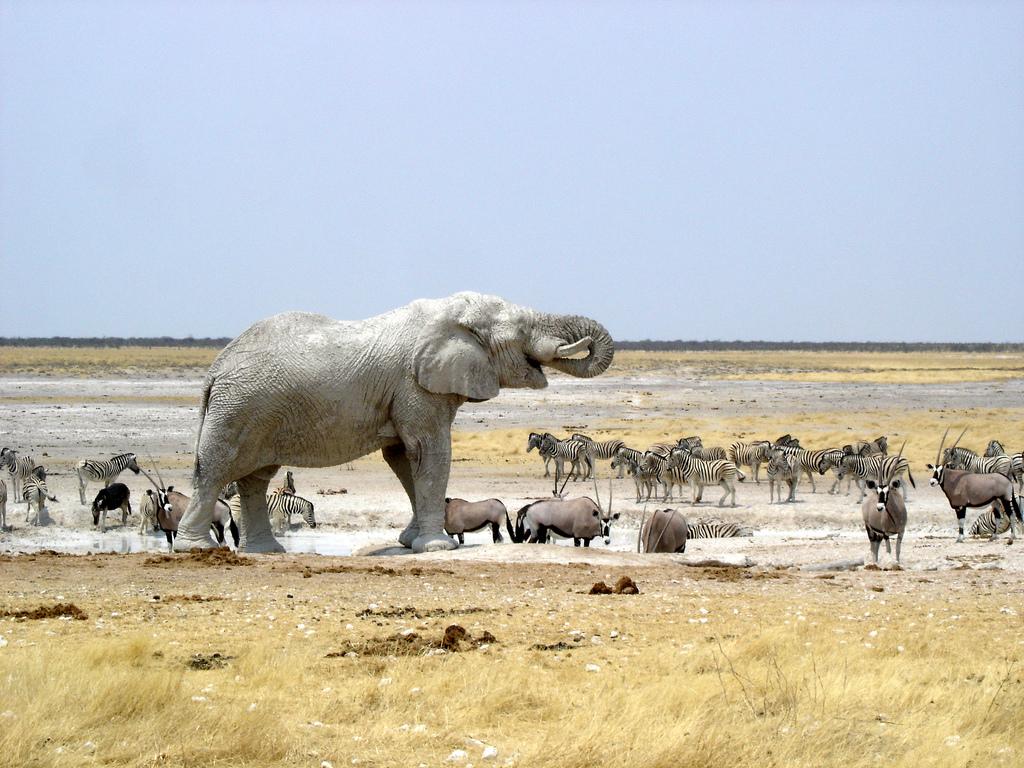 Etosha Namibië - bestemmingen 2020