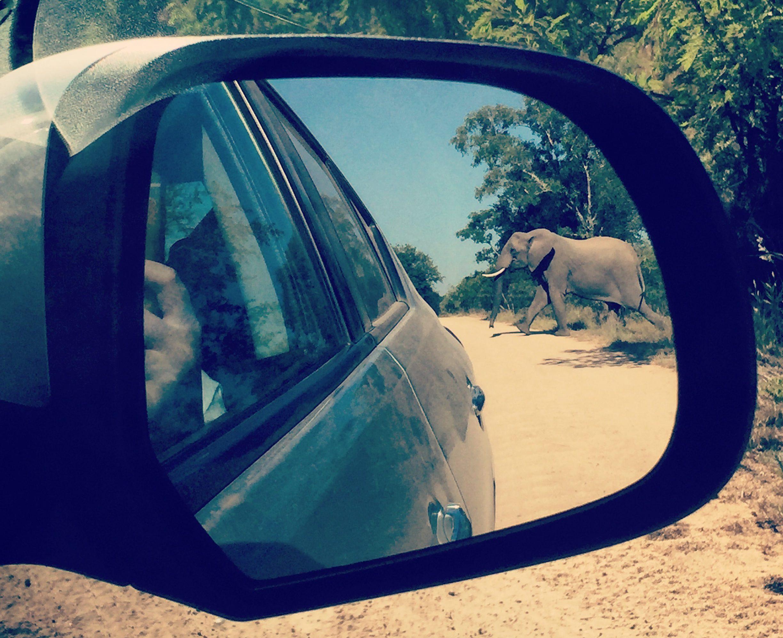 Zuid-Afrika roadtrip olifant