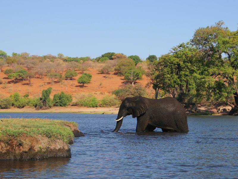 olifanten botswana