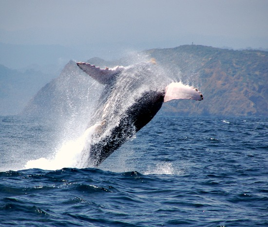 ecuador walvis