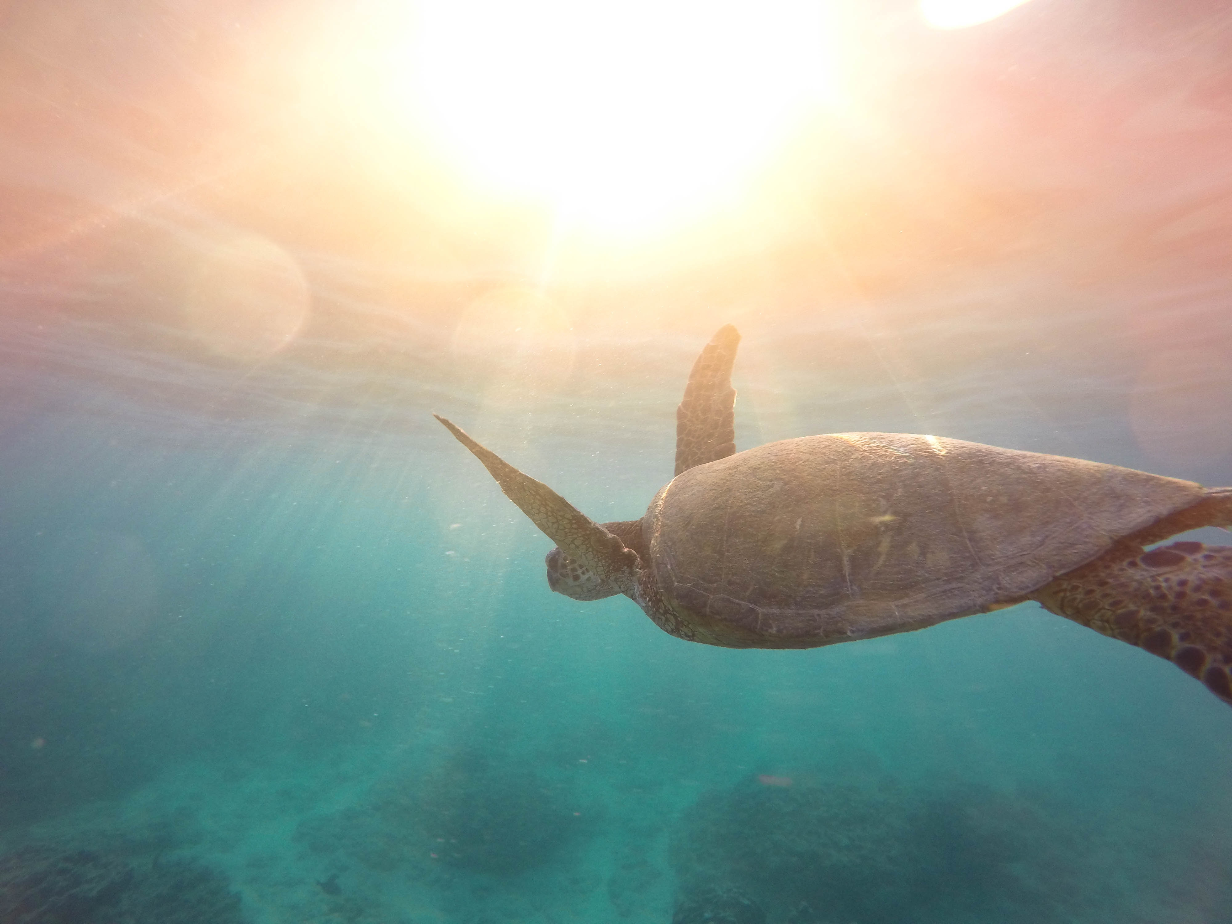 duiken schildpad