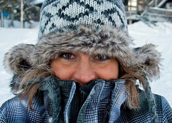 Kou in Lapland