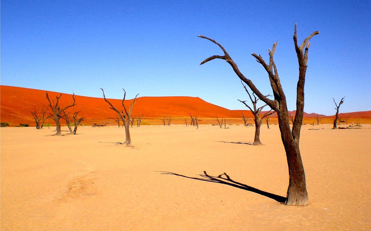 Deadvlei - rondreis Namibië