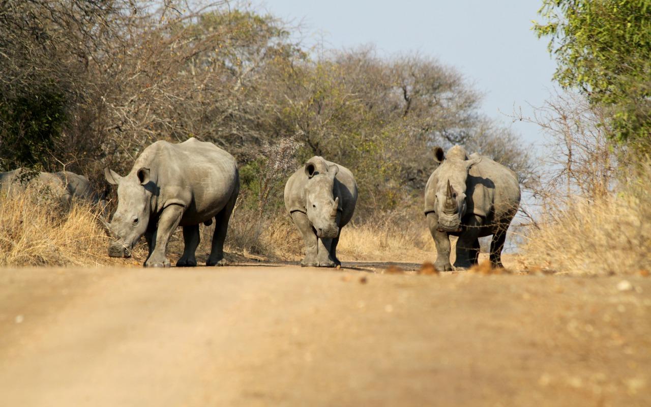 Neushoorns spotten - Zuid-Afrika rondreis