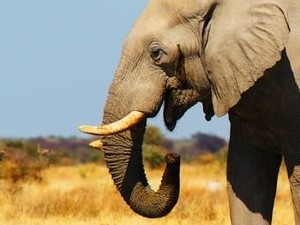 Botswana rondreis