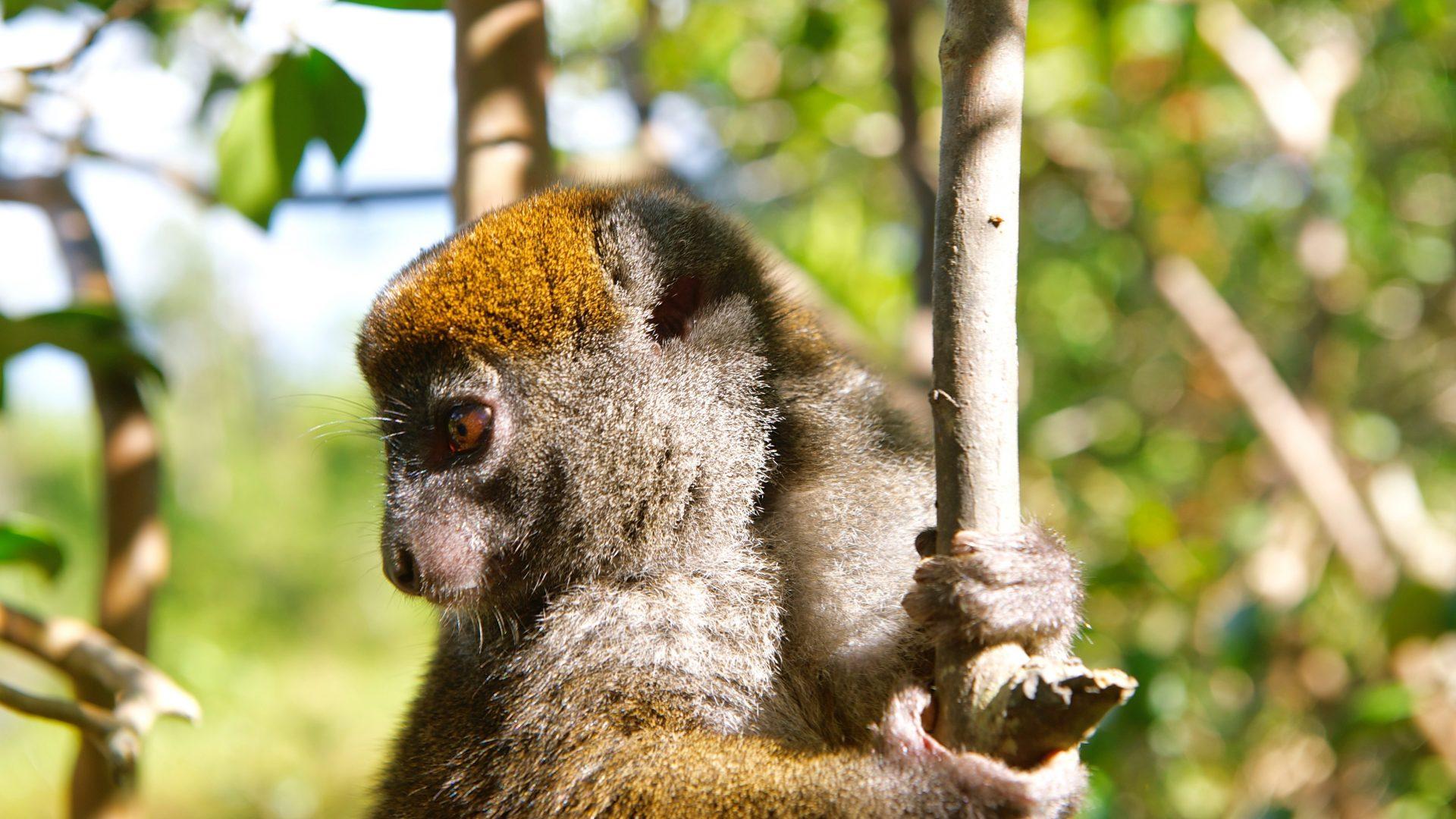 Praktische informatie Madagaskar