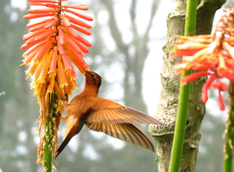 vogel colombia informatie