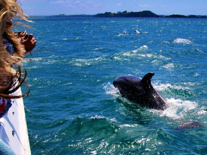 Dolfijnen spotten Madeira