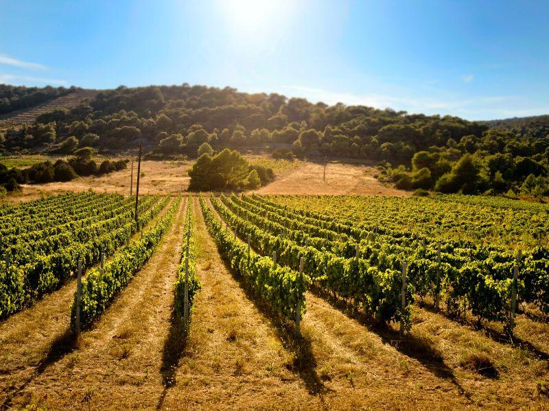 Wijngaarden in Slovenië en Kroatië