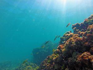 Kayak-snorkel-excursie-Samara