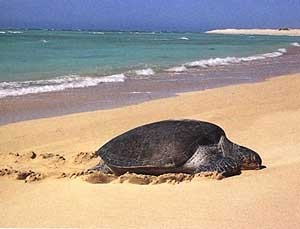 schilpad strand costa rica