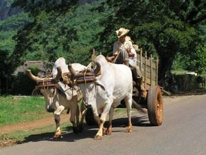 cuba paard wagen