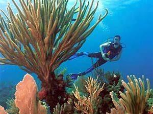 koraal-Santa-Lucia