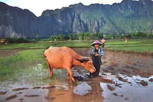 Platteland Thailand