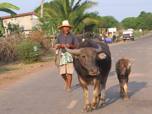 Het Thaise platteland Thailand