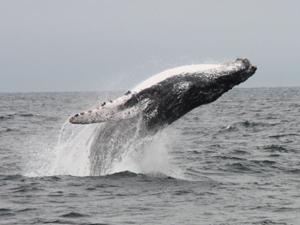 Walvisseizoen Zuid-Afrika