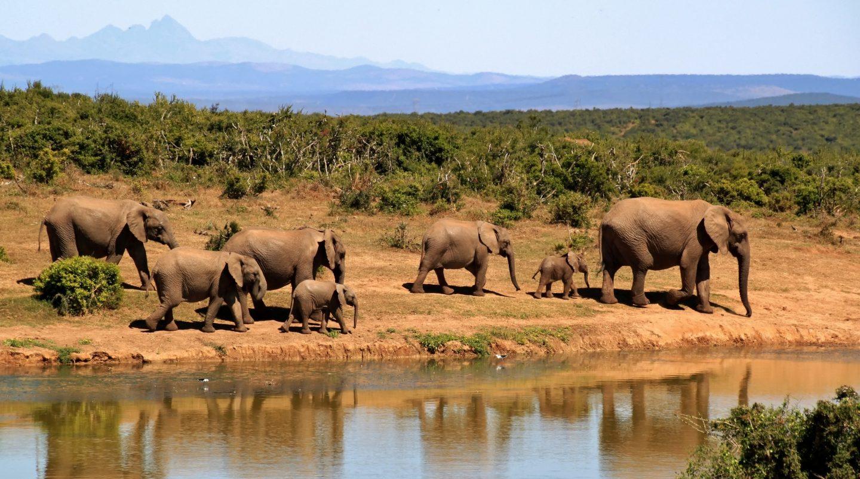 vakantie Zuid-Afrika