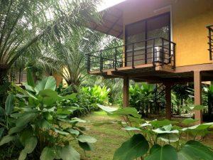 Khao Sok Thailand - junglelodge