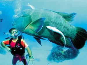 australie reis duiken