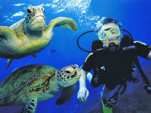 Australië oostkust reis - Duiken Great Barrier Reef