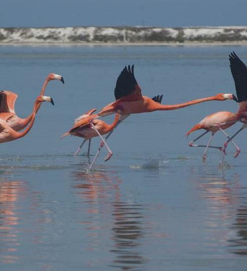 Flamingo's Mexico
