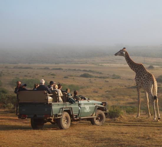 jeep giraffe zuid-afrika