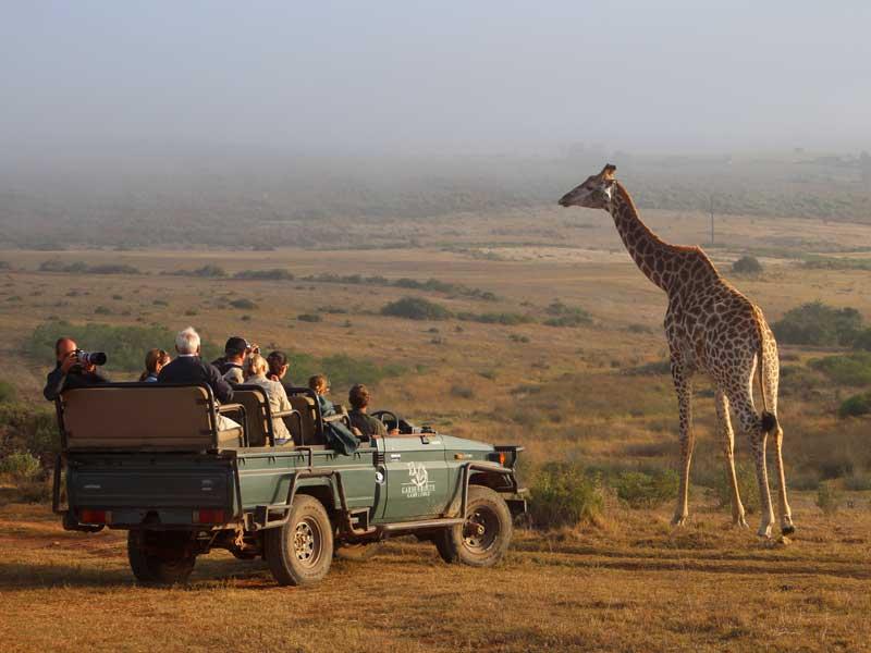 Safari Zuid-Afrika - Giraffe