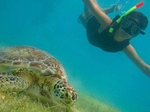 snorkelen-schildpadden