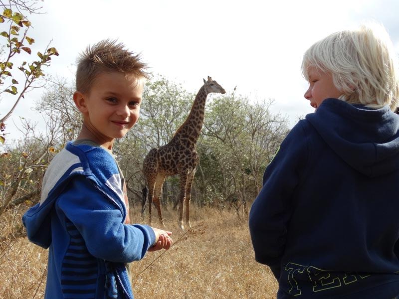 Zuid-Afrika Safari giraffe