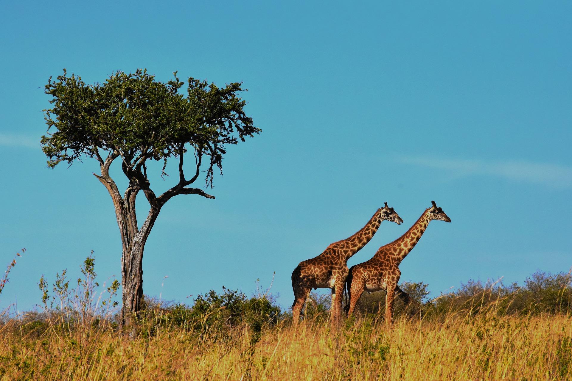 tanzania-wildlife