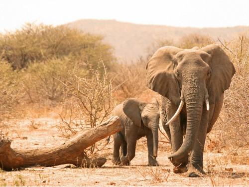zuid-afrika-met-kinderen-olifanten