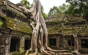 Tempel in de jungle