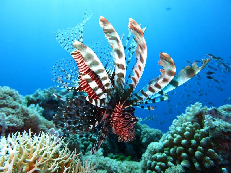 snorkelen aqaba